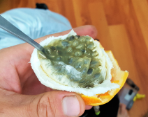 Granadilla - yummy!